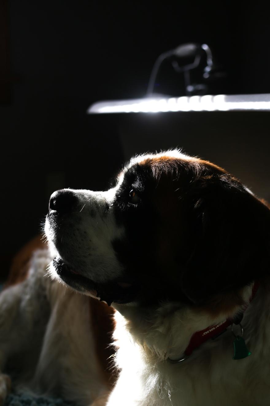 CG_DogsHouse_0820-1